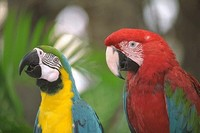 Parrots at Zoological Park